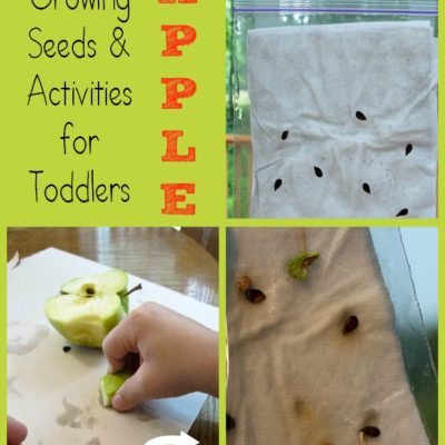 Growing Apple Seeds + Apple Activities for Toddlers