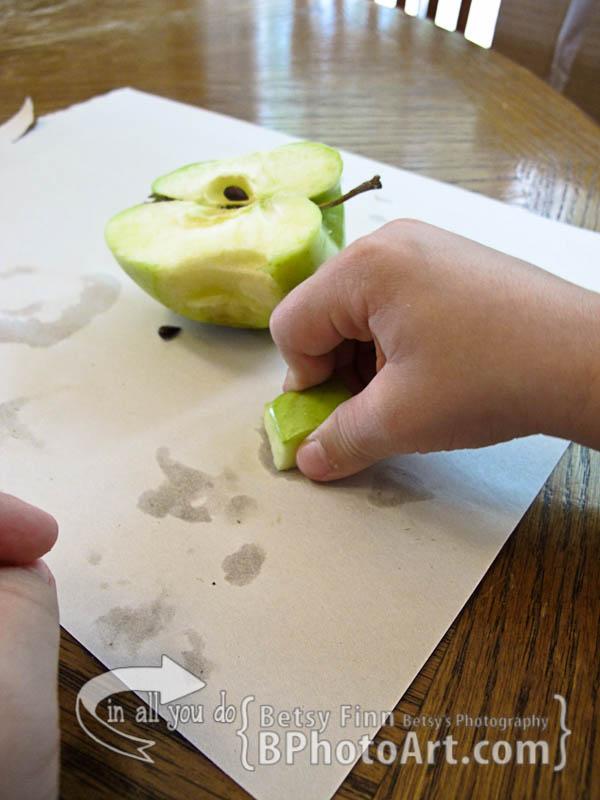 bphotoart-appleseed-activities-7636