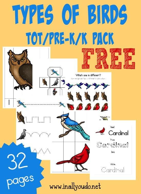 Free Types of Birds Preschool Pack