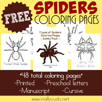 Types of Spiders Coloring Pages