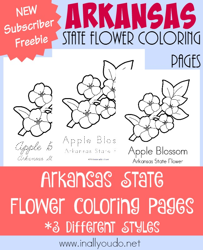 The Apple Blossom is a beautiful flower. Learn about it and the State of Arkansas in today's free coloring pages! {free printables} :: www.inallyoudo.net