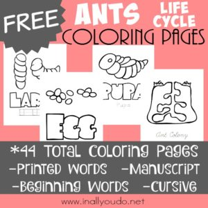 Ants are fascinating and amazing creatures. They may seem annoying, but their colonies are truly breathtaking. These Ant Life Cycle Coloring pages are a great way to introduce them to your kids! :: www.inallyoudo.net