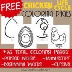 Chicken Life Cycle Coloring Pages