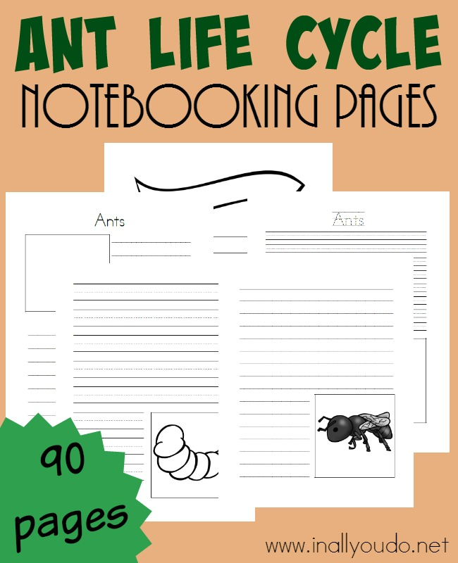 Studying ants and their life cycle can be FUN and fascinating. Grab these notebooking pages to record it all!! :: www.inallyoudo.net
