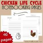 Chicken Life Cycle Notebooking Pages