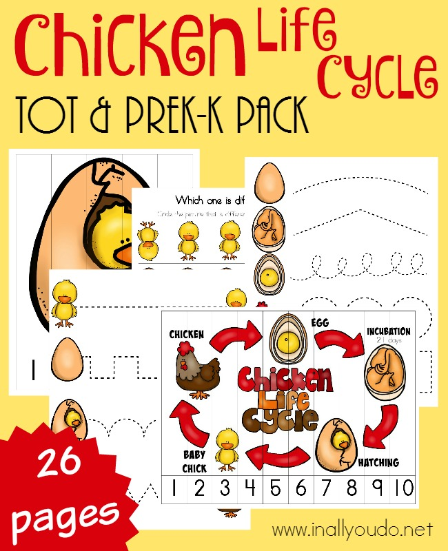 Your little ones will have fun learning all about the Life Cycle of a Chicken with this fun Tot & PreK-K Pack full of puzzles & activities! :: www.inallyoudo.net