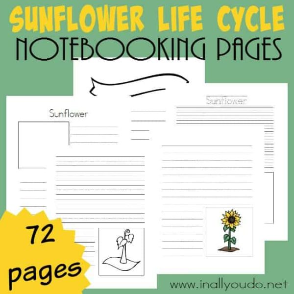 These Sunflower Life Cycle Notebooking Pages are perfect for studying the life cycle of plants and recording all your research. Includes over 70 pages of templates! :: www.inallyoudo.net