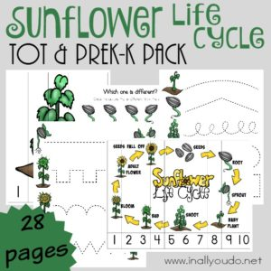 Little ones will enjoy learning all about the life cycle of the Sunflower with this Tot & PreK-K Pack. Includes 28 pages of puzzles & activities!! :: www.inallyoudo.net