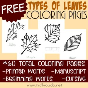 Types of Leaves Coloring Pages