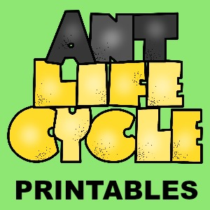 Ant Life Cycle button