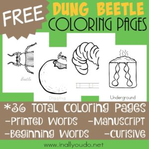 Whether you like insects or not, studying their life cycles are so fun and fascinating. Introduce the Dung Beetle with these fun coloring pages! :: www.inallyoudo.netA