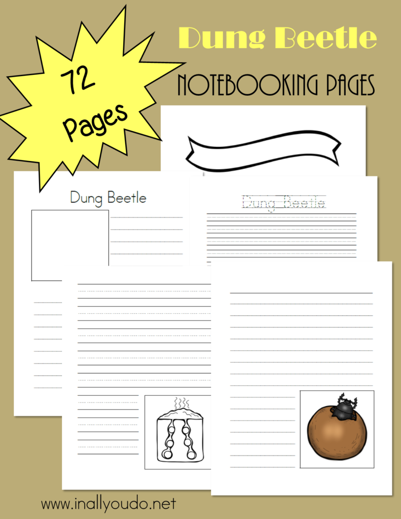 These Notebooking Pages are a great way to record all the fascinating facts about the Dung Beetle and its life cycle! Includes 72 pages of templates! :: www.inallyoudo.net