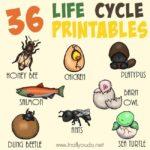 36 Life Cycle Printables