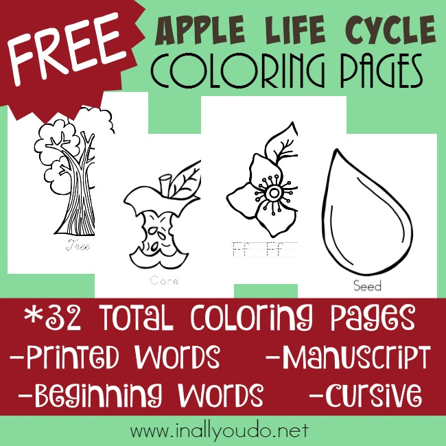 picture regarding Apple Life Cycle Printable named Apple Daily life Cycle Coloring Web pages - In just All On your own Do