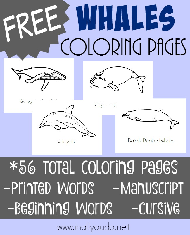 Types Of Whales Coloring Pages In All You Do