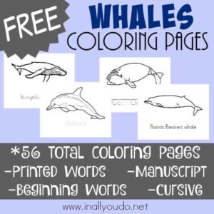 Types of Whales Coloring Pages