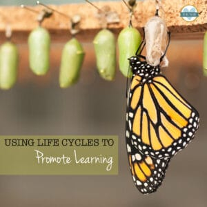 butterfly just emerging from chrysalis
